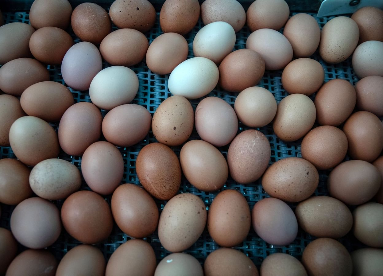Americans to pay up for organic eggs after trade spat with India